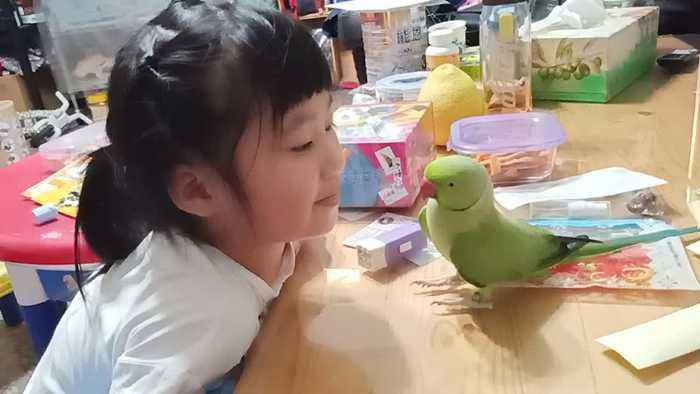 Bird Shows Little Girl Love
