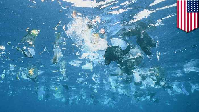 Baby fish found consuming plastic waste, study finds