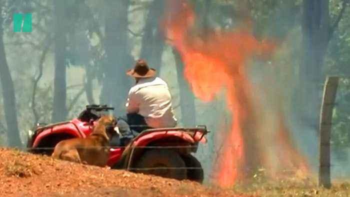 Bushfires: What Causes Them?