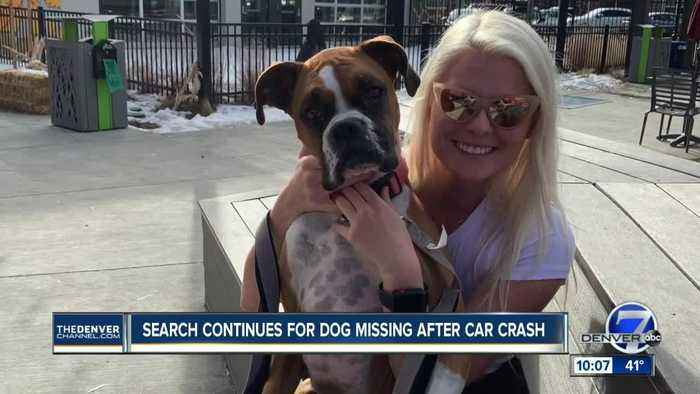 Weld County couple searching for dog after devastating crash paralyzes driver