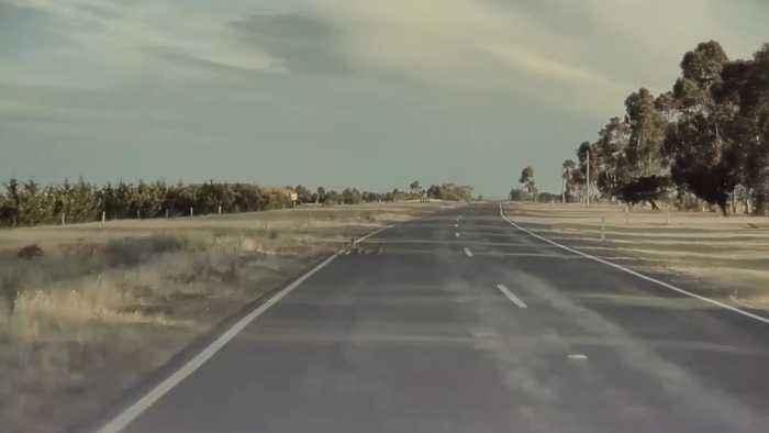 Tesla Autopilot Detects Ducks Crossing the Highway