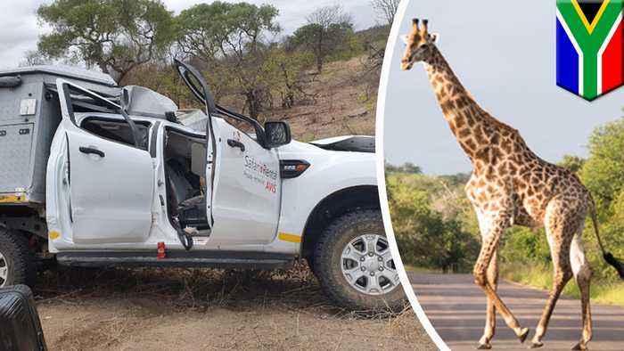 Giraffe hit by van dies and falls on jeep, killing Swiss tourist