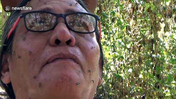 Strange case of man in Indonesia who can summon bees by meditating