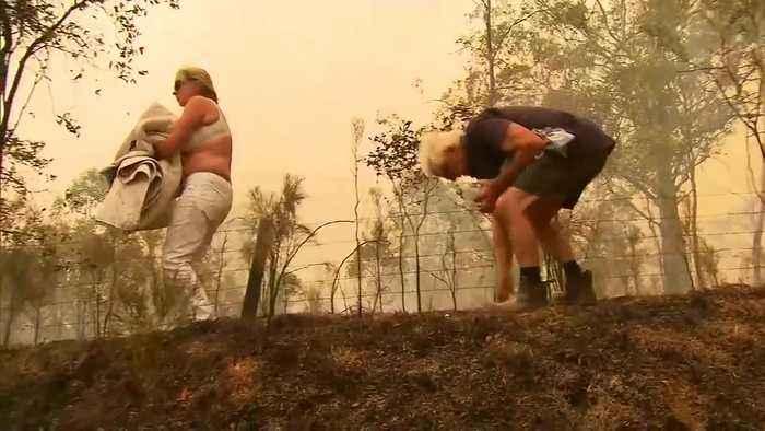 VIDEO: Woman saves koala from bushfires in Australia