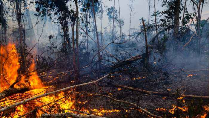 Brazil's Deforestation Increases 30 Percent From 2018
