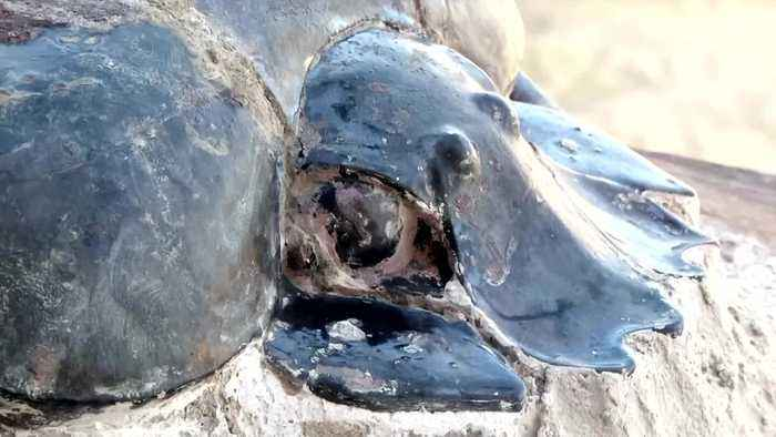 Egypt unveils cache of mummified animals
