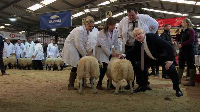 Boris Johnson shears a sheep on campaign trail in Wales