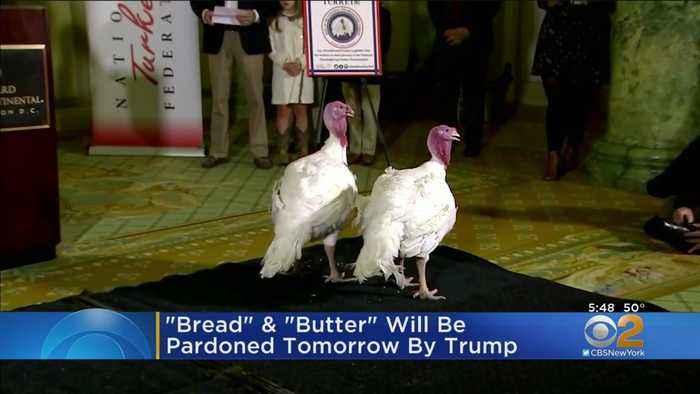 Turkeys Bread & Butter Will Be Pardoned By President Donald Trump