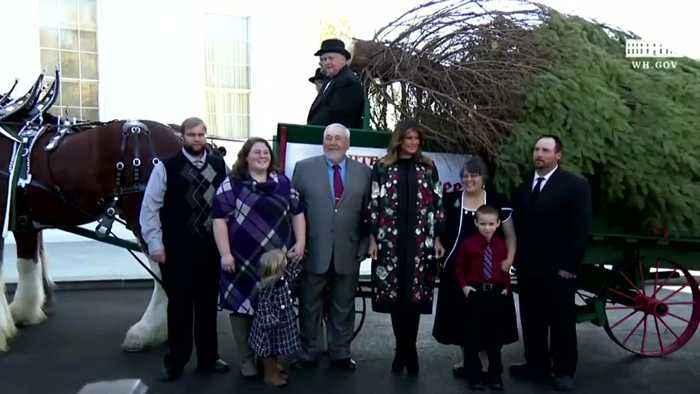 Melania receives the White House Christmas Tree