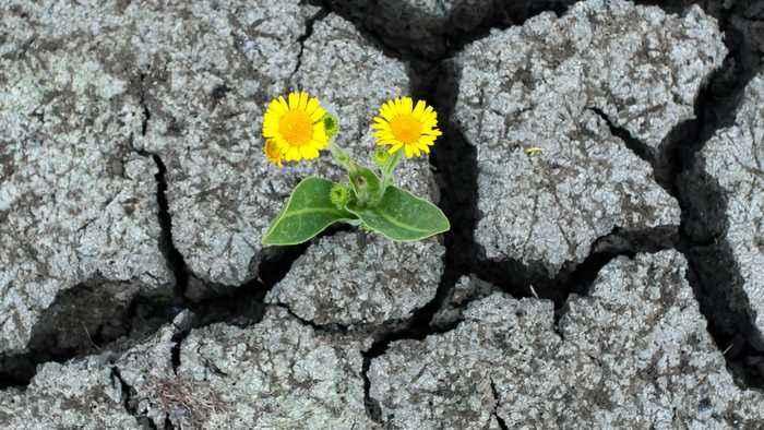 UN's Guterres: War Against Nature Must Stop