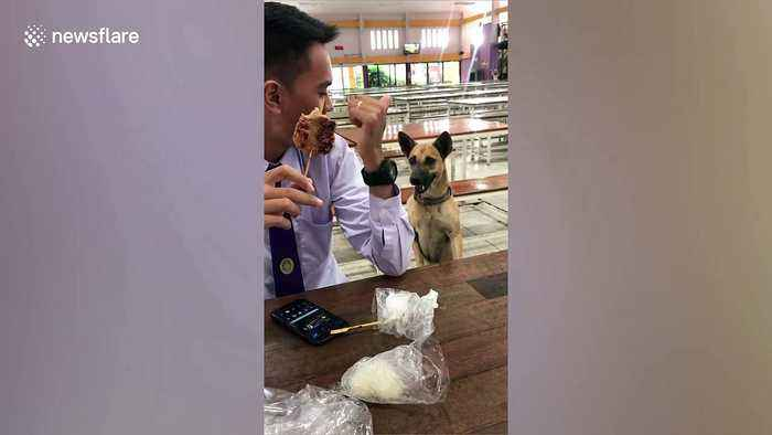 Thai students 'mugged' by dog begging for food