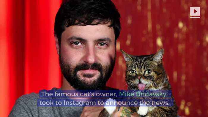 Internet Cat Sensation Lil BUB Has Died
