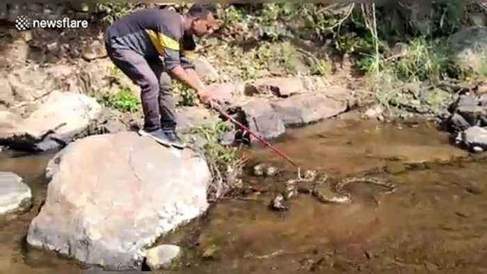 Eight-foot-python found wrapped up around truck in south-east India
