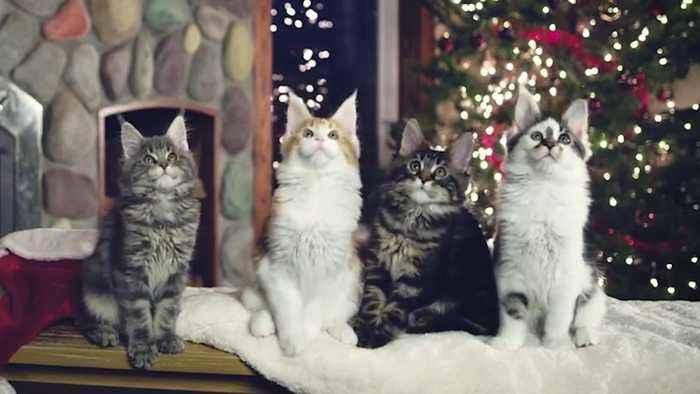 O Christmas Tree | Holiday Pets