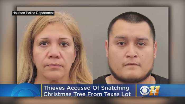 Thieves Accused Of Snatching Christmas Trees From Lot In Texas