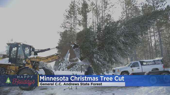 The State Of Minnesota Now Has It's Official Christmas Tree