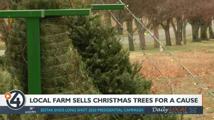 Local farm sells Christmas trees for a cause