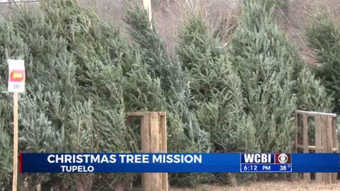 Tree Mission