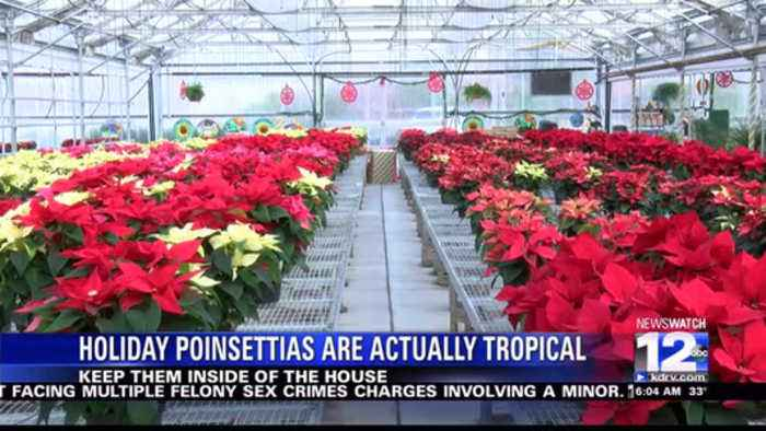 Ashland Greenhouses grow thousands of poinsettias for the holidays
