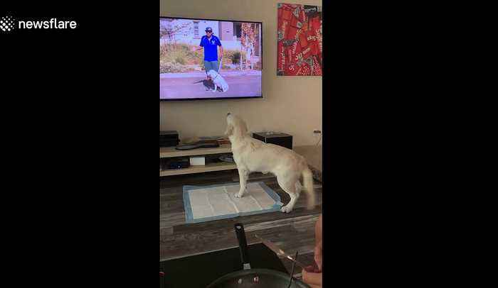 Look, I'm on TV! California dog is very happy to see himself
