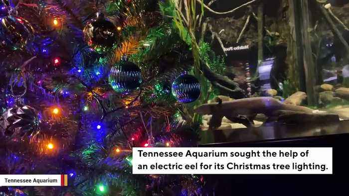 See: Aquarium Uses Electric Eel To Illuminate Christmas Tree