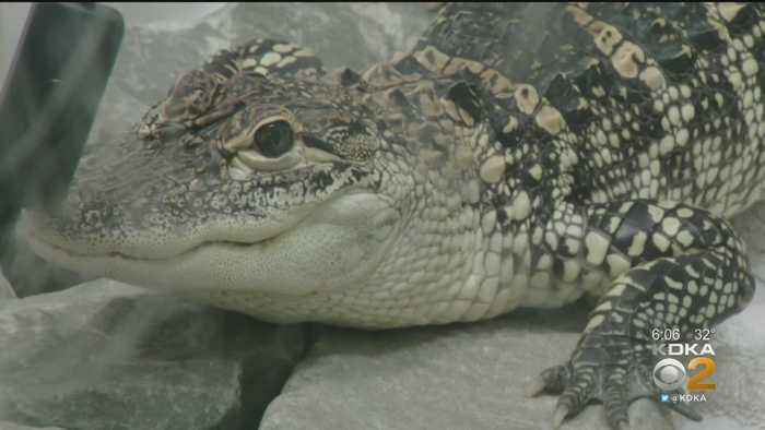 Pittsburgh Passes Ordinance Putting Restrictions On Exotic Animals