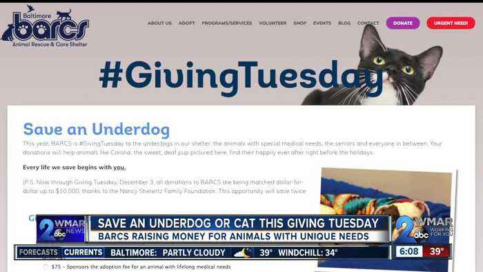 'Save an Underdog' at BARCS this Giving Tuesday
