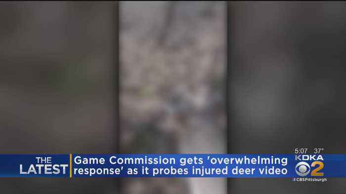 Game Commission Continues To Investigate Video Showing Injured Deer Being Tortured