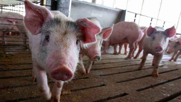 China To Waive Tariffs On Some U.S. Pork, Soybean Purchases