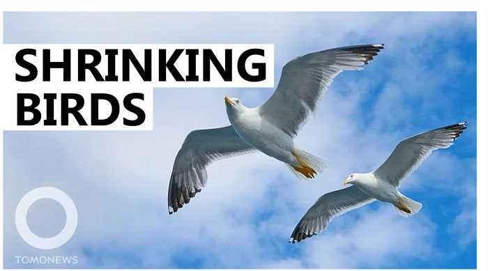 North American birds are shrinking