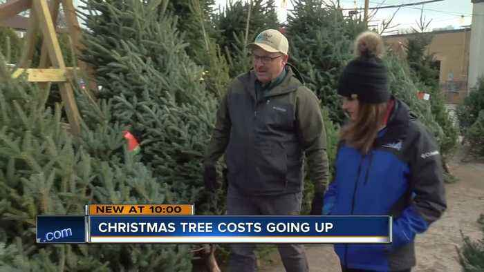 Real Christmas trees will cost you more this year