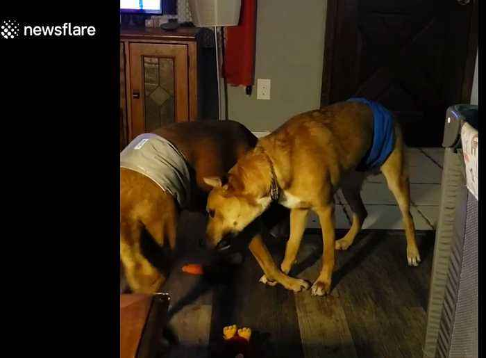 Special needs pups Trimble and Twitch show each other some brotherly love