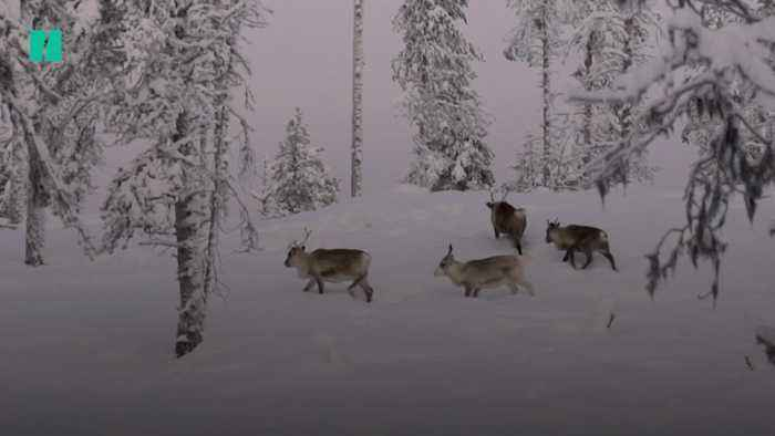 Troubling Climate Trends Transform The Arctic