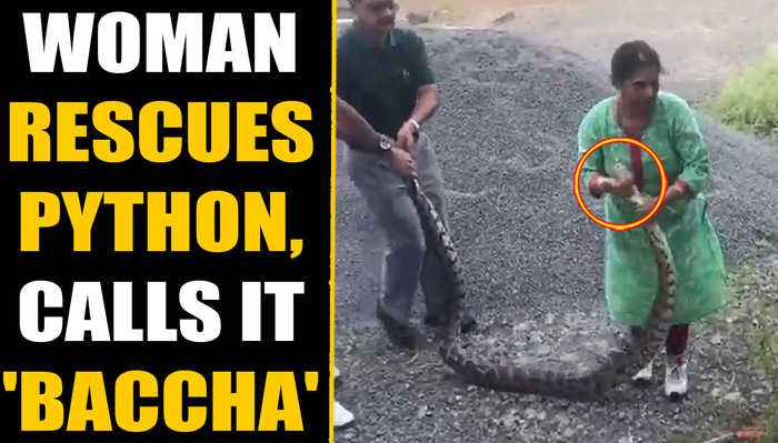 Woman rescues 20 KG python, lovingly calls the reptile 'baccha' | Oneindia News