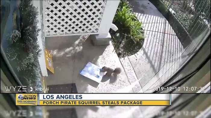 Porch pirate squirrel caught stealing package in Los Angeles