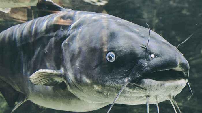 Seems Fishy: Bird Drops Cargo, Shattering Woman's Windshield
