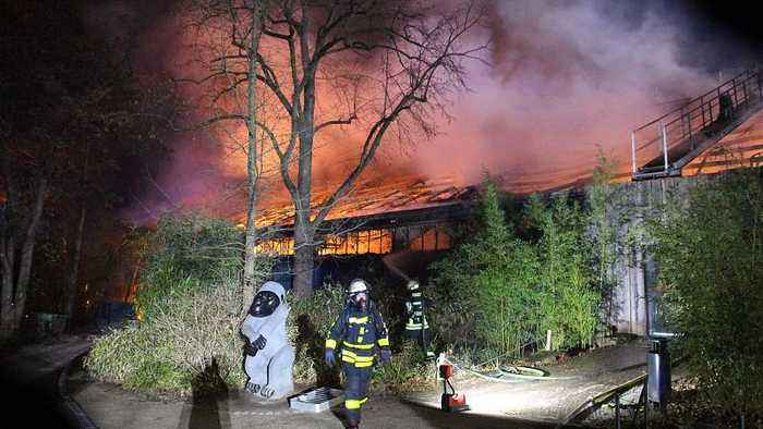 Krefeld Zoo: Massive blaze in Germany leaves more than 30 animals dead