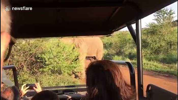 British tourists have hair-raising encounter with bull elephant while on safari in South Africa