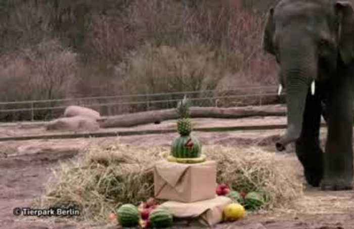 Berlin zoo hosts birthday party for elephant Edgar