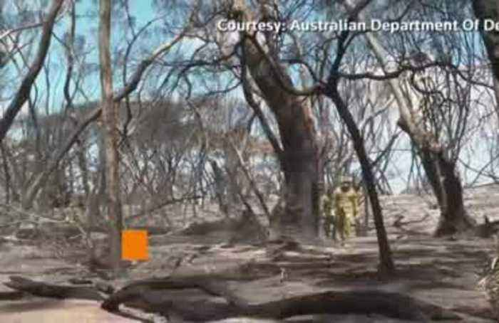 The grim clear up of dead wildlife in Australia's bushfires