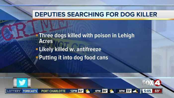 Suspect killing dogs in Lehigh Acres