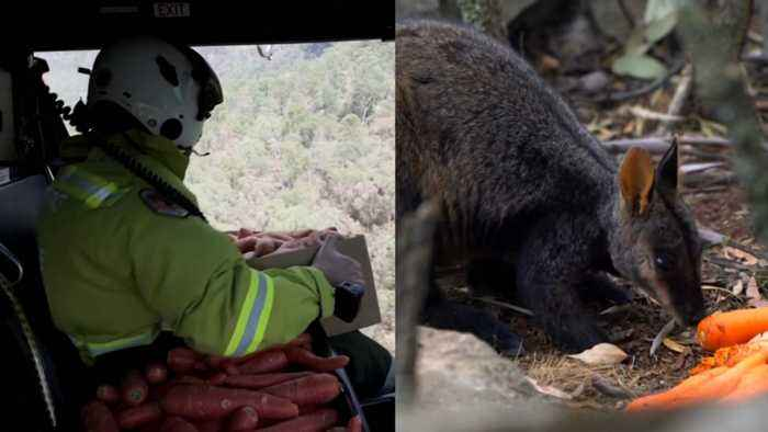 Australian Officials Are Dropping Food Out Of Helicopters For Animals
