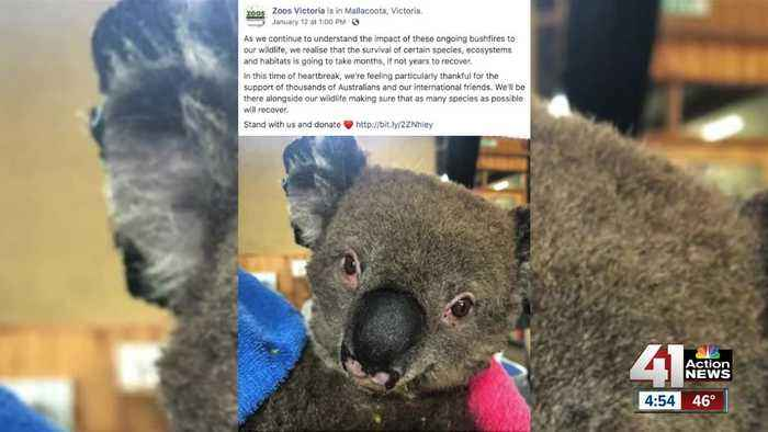 KC Zoo raises funds for relief, recovery in Australia