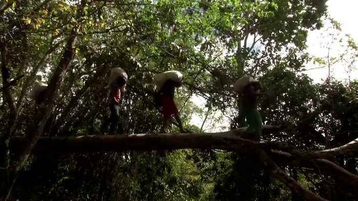 Indigenous tribes gather to protect the Amazon