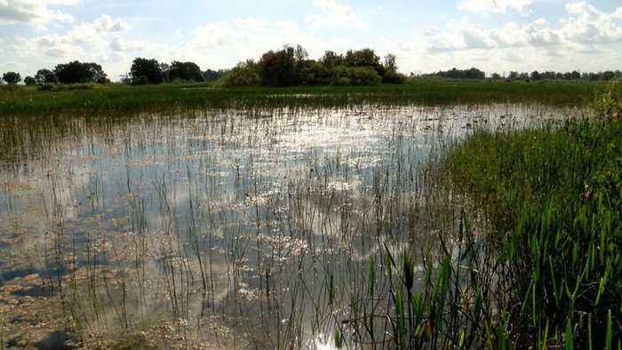 State of Florida to buy 20,000 acres in the Everglades