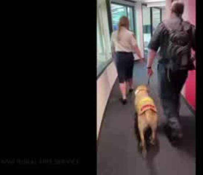 Support dog brings smiles to Australia firefighers