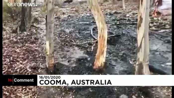 Rain relieves wildfire-ravaged Australia