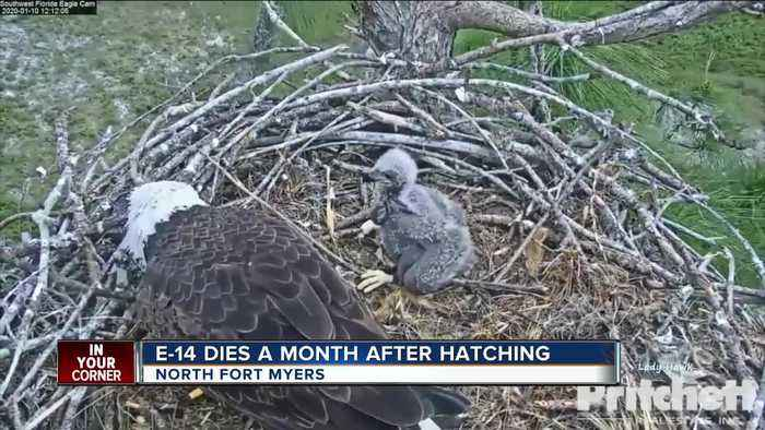 Eaglet passes away on popular eagle webcam