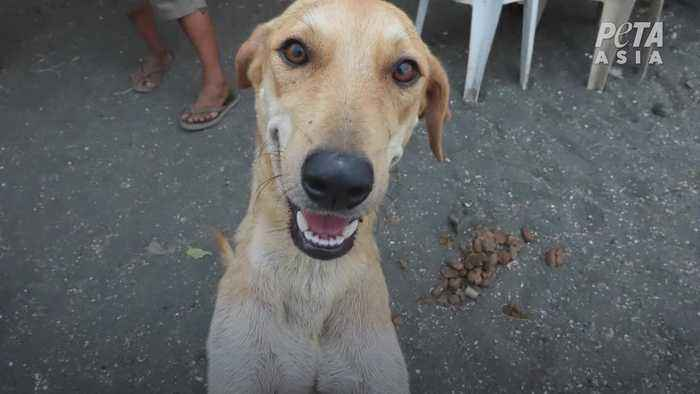 Dog rescued from Taal Island after volcanic eruption