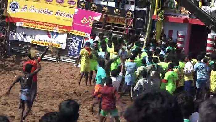 At least 25 injured in latest day of controversial bull-taming festival in south India